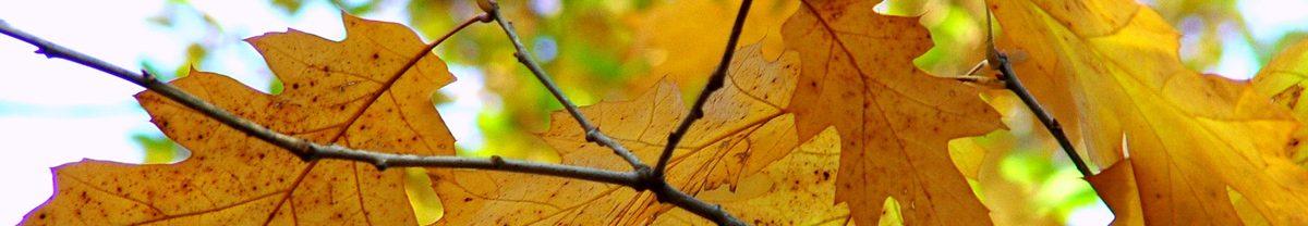 Banner_Image_Leaves