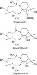 Grayanotoxin In Honey